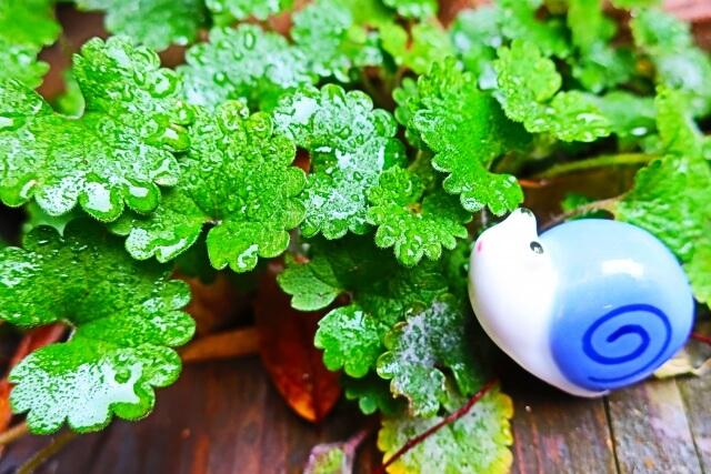 雨に濡れた葉っぱとカタツムリの置物